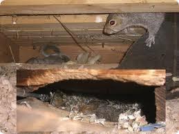 Overhead Door Rockland Ma Squirrel Rockland Ma Wildlife Squirrel Removal Services