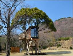 Cool Tree Houses 1319 Best Tree Houses Images On Pinterest Treehouses Trees And