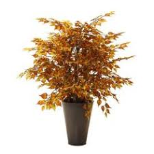 4 mango tree in metal container tr wp7081 trees topiaries