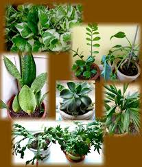 good inside plants a plant s life indoors central texas gardening