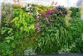 best plants for vertical garden vertical garden plants balcony