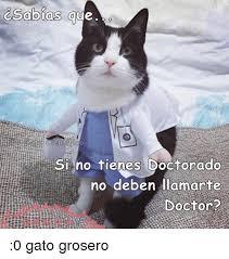 imagenes groseras de gatos csabias que si no tienes doctorado no deben llamarte doctor 0 gato