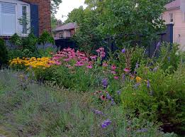 native garden plants native plants bring all the birds to the yard credit valley
