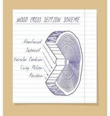 sketch of wood cross section scheme royalty free vector