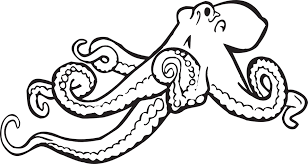 free vector graphic octopus sketch drawing ocean free image