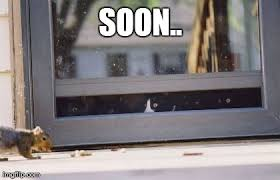 Soon Cat Meme - image tagged in funny soon cats imgflip