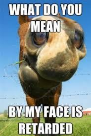 Horse Riding Meme - horse meme gay horse meme