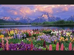 imagenes con flores azules dia de la maestra lista las flores más hermosas del planeta