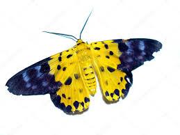was ist das für ein insekt eine wanze oder was urlaub insekten wanze insekt stockfoto porjai 20531635