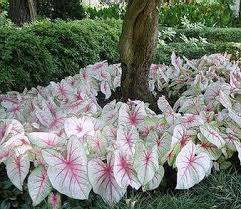Flower Shrubs For Shaded Areas - 55 best planting for shady areas images on pinterest landscaping