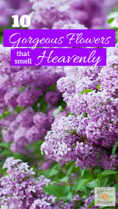 Fragrant Bedding Plants Grow These 10 Fragrant Flowers For A Heavenly Smelling Garden