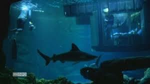 chambre aquarium dormir parmi les requins l offre improbable de l aquarium de