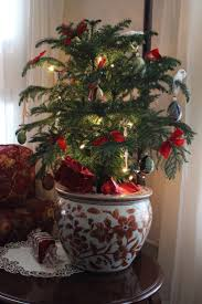 439 best holiday plants images on pinterest christmas ideas