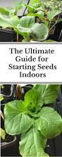 282 best seeds seedlings images on pinterest vegetable garden