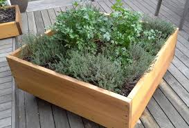 decoration herbs to grow outside in pots herbs in containers