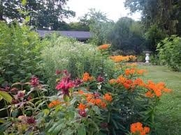 native plants landscaping a biodiversity garden is a native plant garden is a pollinator