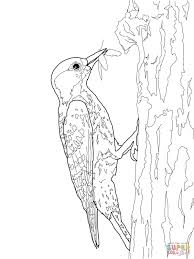 red cockaded woodpecker coloring page free printable coloring pages