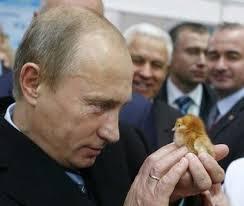 Vladimir Putin Meme - 32 pictures that prove vladimir putin is only human baby