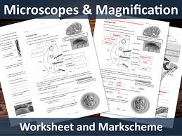 looking at cells gcse microscopes and magnification worksheet