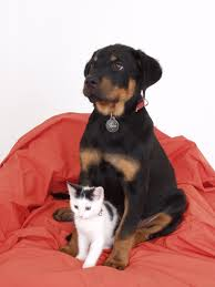 boxer dog kidney problems kidney disease in dogs and cats