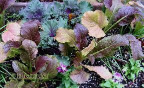 fall container gardening with edibles fairegarden