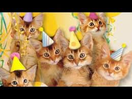 Happy Birthday Cat Memes - cute cats sing happy birthday youtube