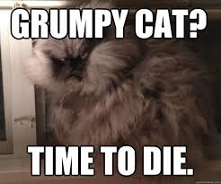 Colonel Meow Memes - view topic r i p colonel meow chicken smoothie