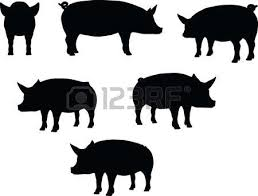 pig stock photos royalty free pig images pictures