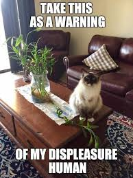 Crazy Cat Meme - cat warning imgflip