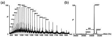 ijms free full text polar glycosylated and lateral non