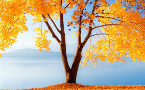 free fall wallpaper for computer autumn desktop wallpapers free on latoro com