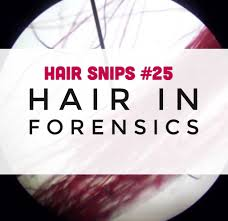 www hairsnips com old hair snips 25 hair in forensics holleewoodhair