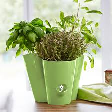 kräutertopf küche fresh herbs trio kräutertopf emsa