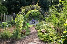 bonnie plants garden plants for your vegetable garden or herb garden