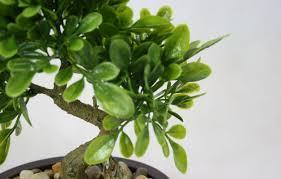 plant pla gr stunning artificial plants