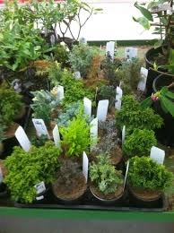 Indoor Tropical Plants For Sale - indoor mini gardens the mini garden guru from twogreenthumbs com