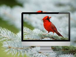 bird wallpapers 18 beautiful birds desktop wallpapers