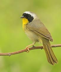 Nc Backyard Birds Ebird
