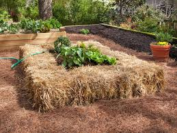What Type Of Wood Is Best For Raised Garden Beds Tips For Raised Beds Hgtv