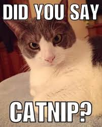 Meme Melody - cattitude meme silly cat melody the cat awww pinterest