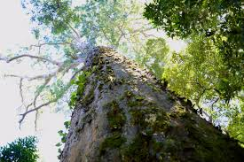 the big tree digital nomad