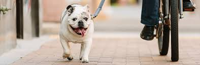 Pet Start A Pet Insurance Quote From Pets Best