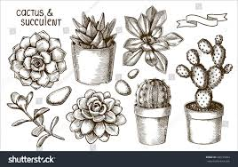 succulents cacti sketch set stock vector 490135063 shutterstock