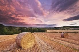 download wallpaper summer field rolls hay free desktop