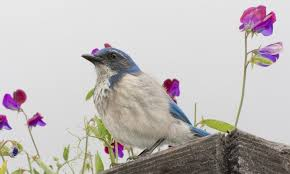 California Backyard Birds by June Nature Photography Site