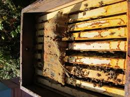 preparing bees for winter at brookfield farm part two physical