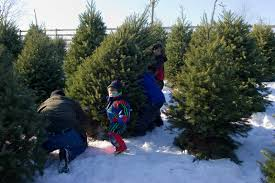 What Trees Are Christmas Trees - roba family farms welcome to roba family farms