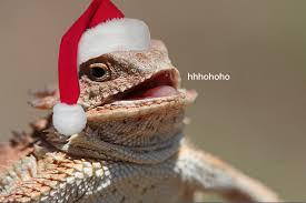 Lizard Meme - hhhohoho laughing lizard hhhehehe know your meme