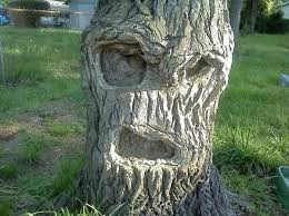 tree face 40 most funniest tree face pictures that will make you laugh