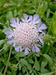 Scottish Rock Garden Forum by 20 August 2015 Kent Alpine Gardener U0027s Diary Gardeners U0027 Diaries